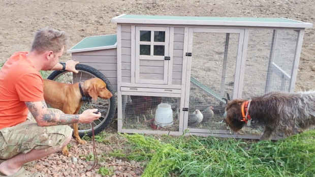 chicken coop modification